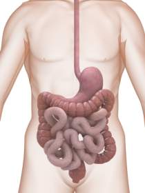 diagram of digestive system function