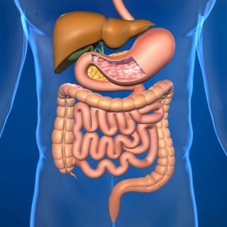 Gastrointestinal System - IBS