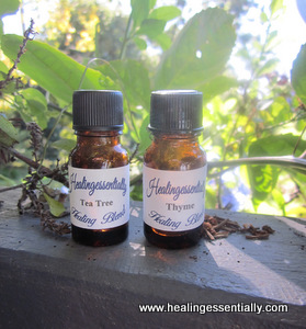 Thyme and Tea Tree for the Immune System