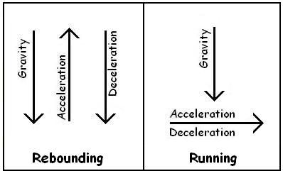 rebound forces explain rebounder exercise benefits