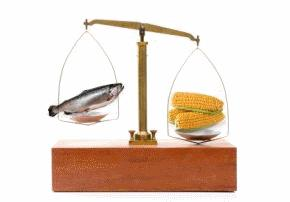 uneven balance scale with corn and fish